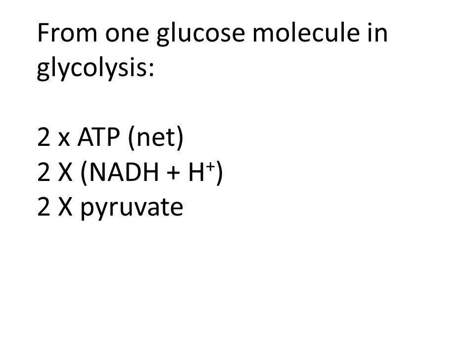 From one glucose molecule in glycolysis: