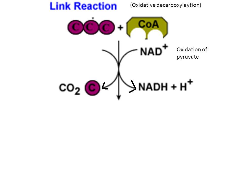 (Oxidative decarboxylaytion)