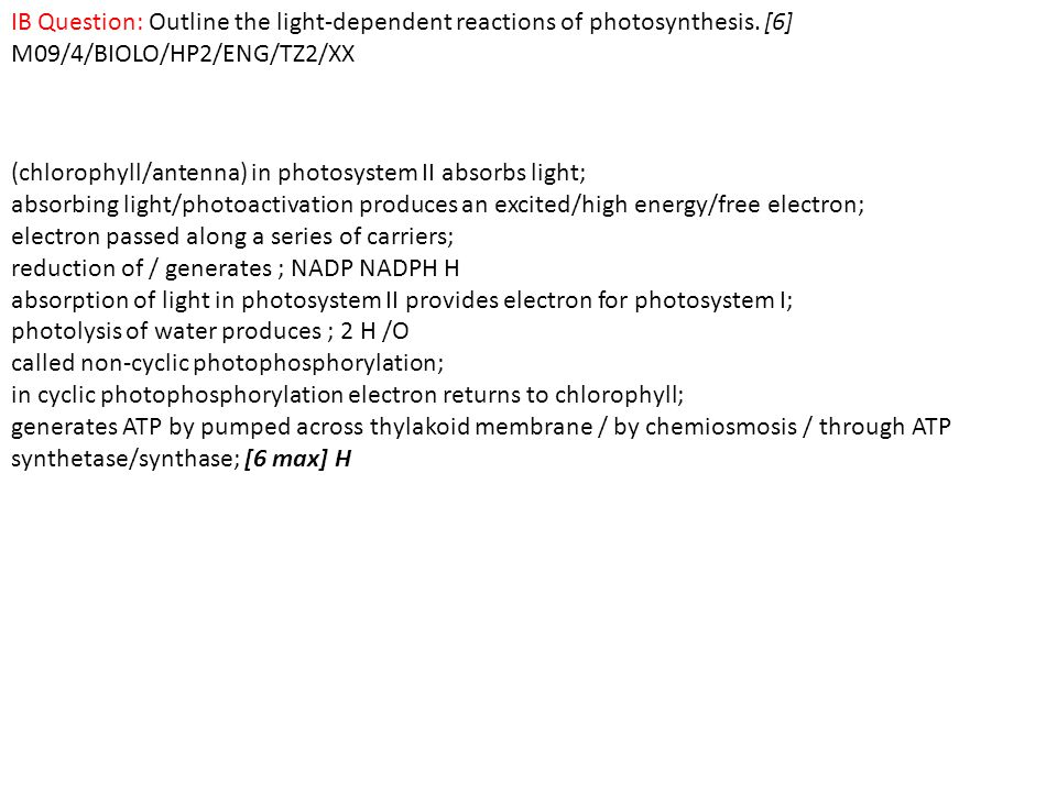IB Question: Outline the light-dependent reactions of photosynthesis