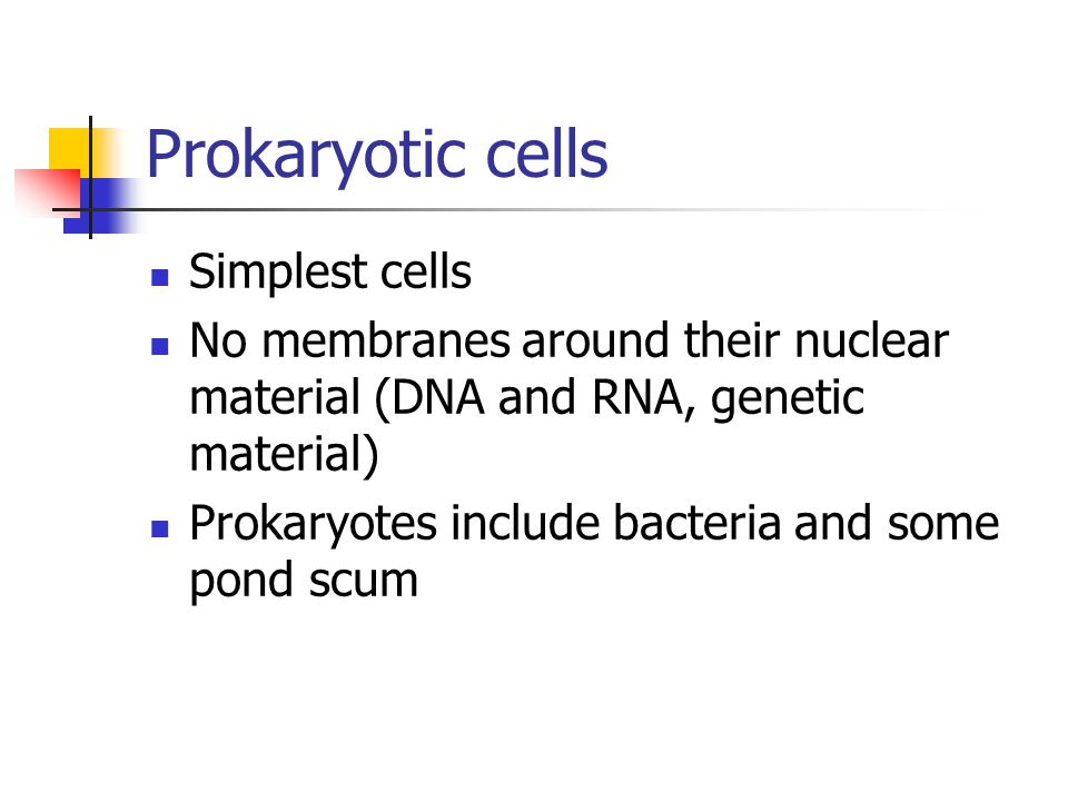 Prokaryotic cells Simplest cells