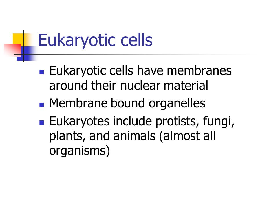 Eukaryotic cells Eukaryotic cells have membranes around their nuclear material. Membrane bound organelles.