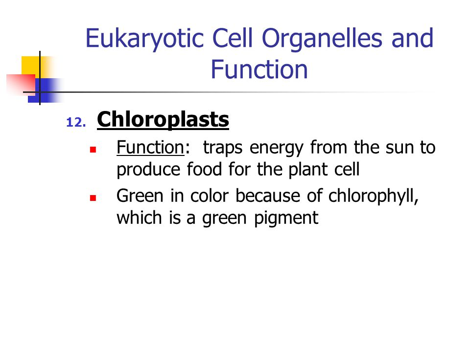 Eukaryotic Cell Organelles and Function