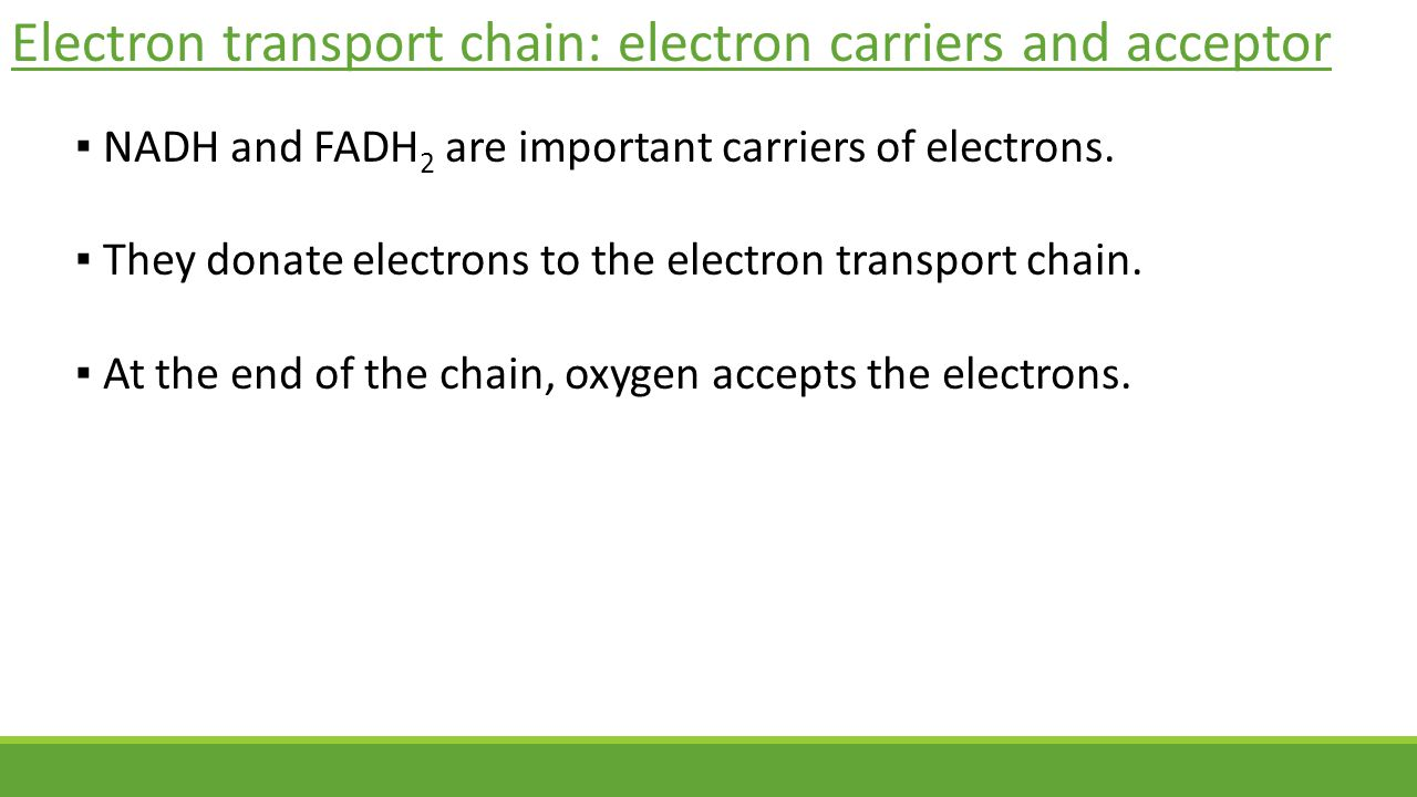 Electron transport chain: electron carriers and acceptor