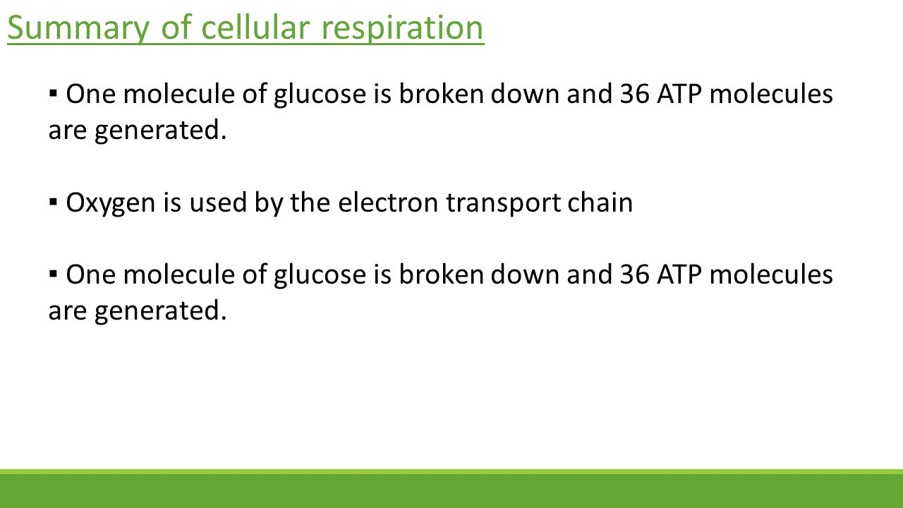 Summary of cellular respiration