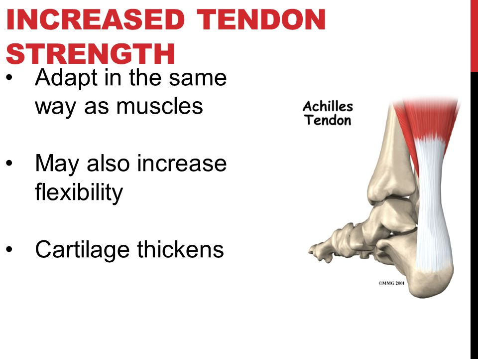 Increased Tendon Strength