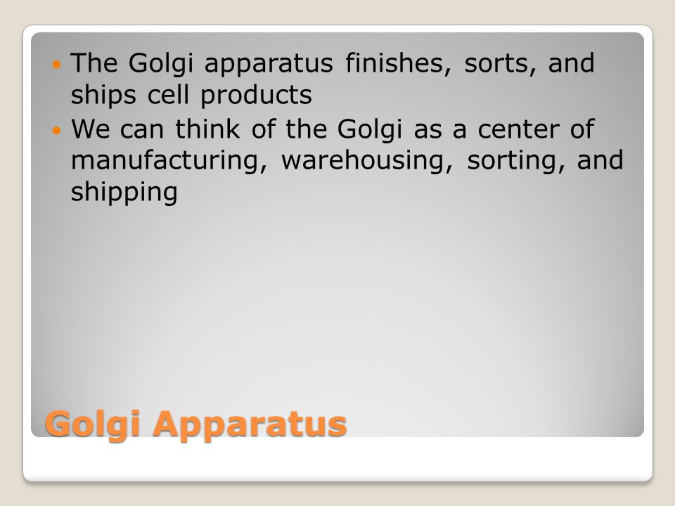 The Golgi apparatus finishes, sorts, and ships cell products