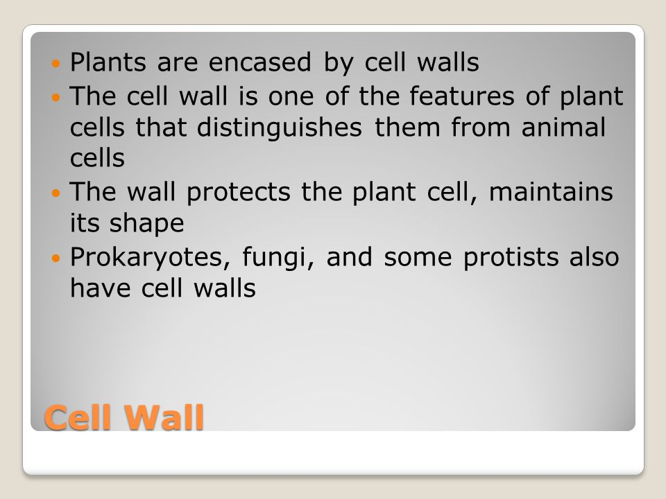 Cell Wall Plants are encased by cell walls