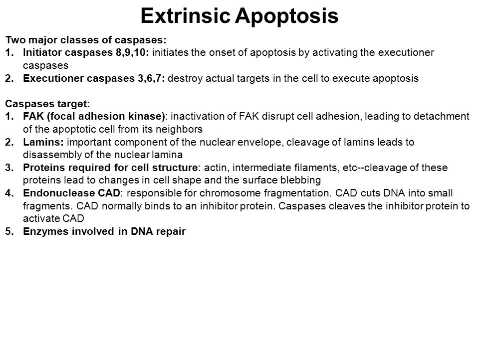 Extrinsic Apoptosis Two major classes of caspases: