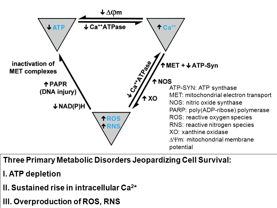 Three Primary Metabolic Disorders Jeopardizing Cell Survival: