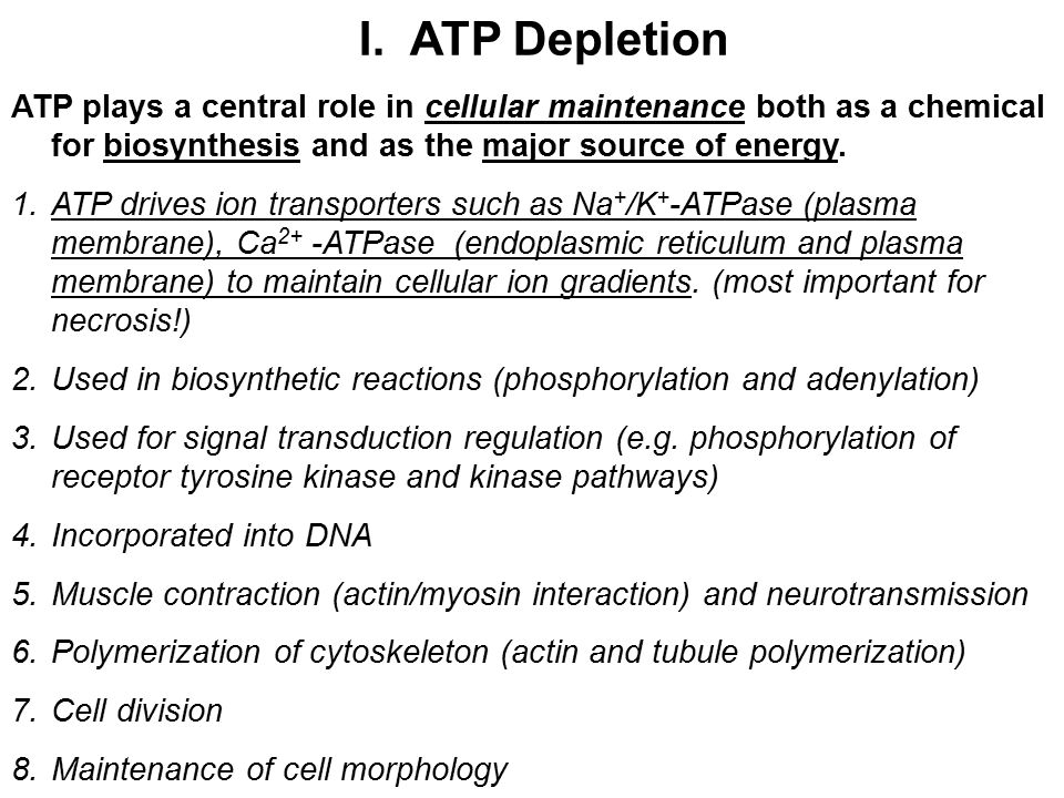 I. ATP Depletion ATP plays a central role in cellular maintenance both as a chemical for biosynthesis and as the major source of energy.