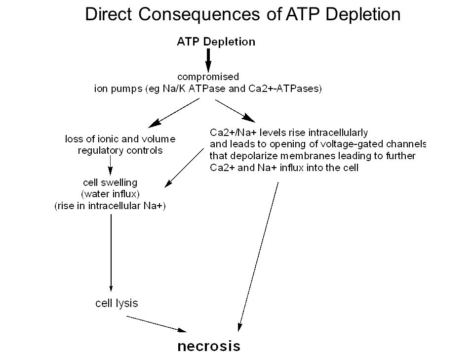 Direct Consequences of ATP Depletion
