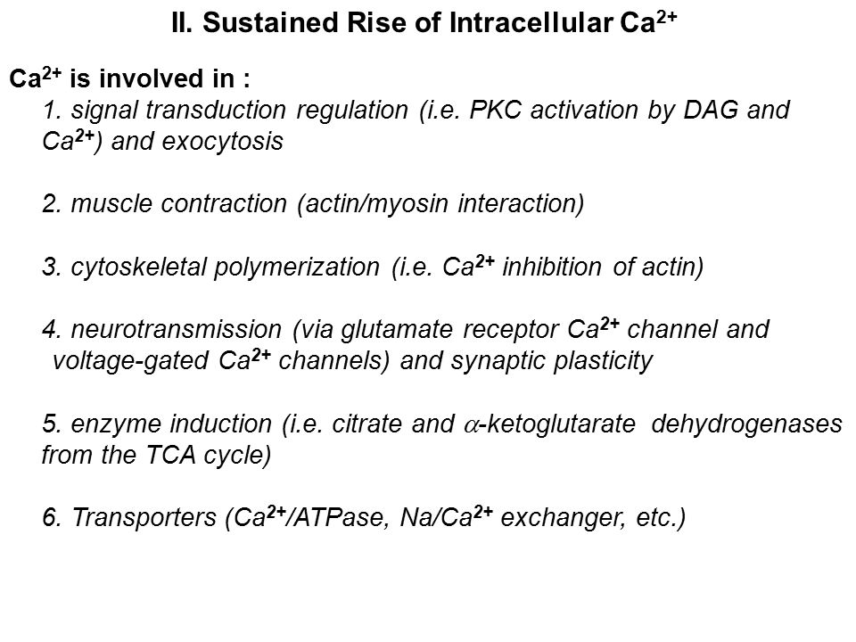 II. Sustained Rise of Intracellular Ca2+