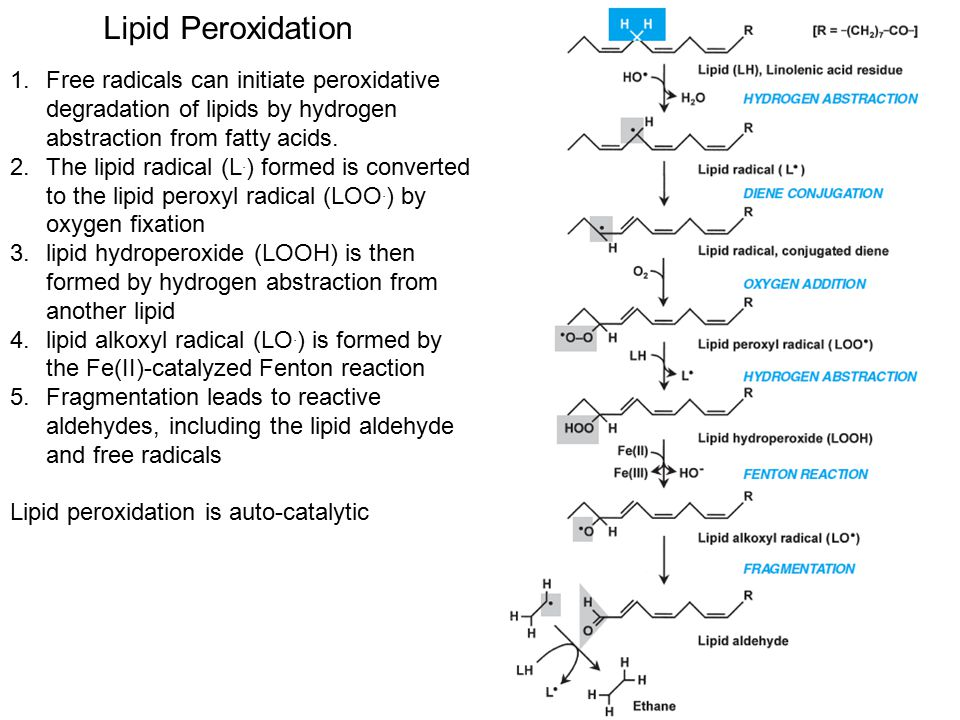 Lipid Peroxidation Free radicals can initiate peroxidative degradation of lipids by hydrogen abstraction from fatty acids.