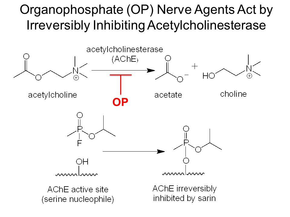 Organophosphate (OP) Nerve Agents Act by Irreversibly Inhibiting Acetylcholinesterase