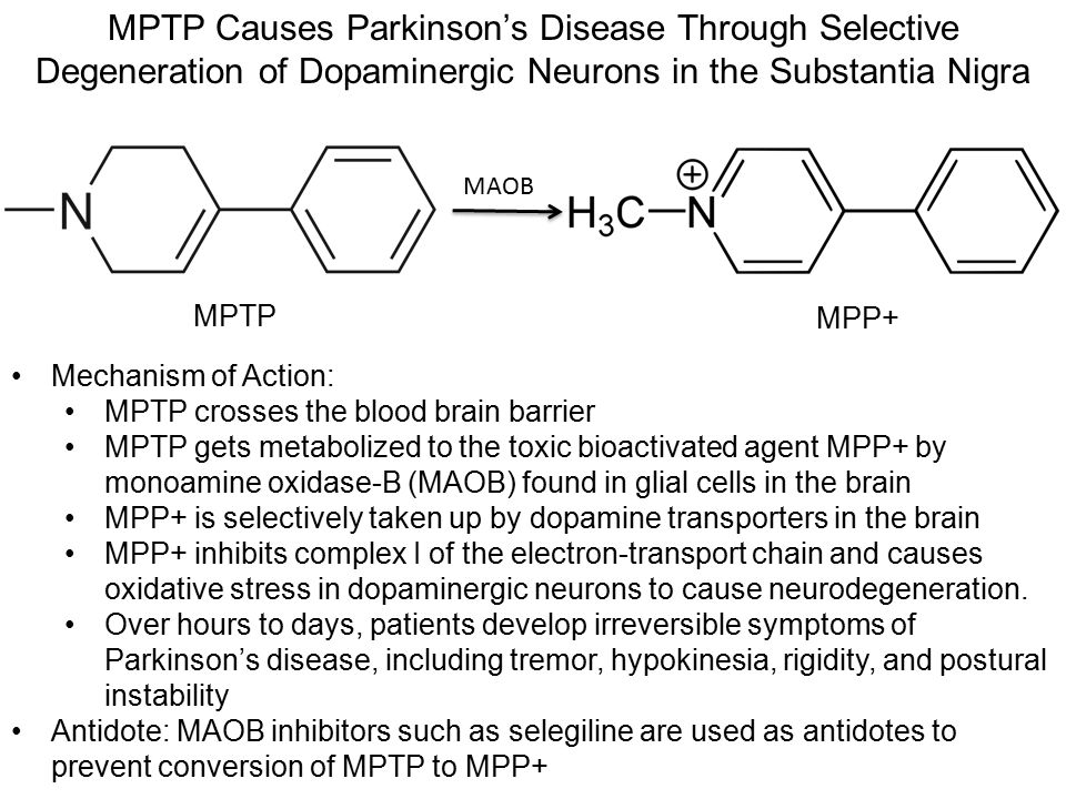 MPTP Causes Parkinson's Disease Through Selective Degeneration of Dopaminergic Neurons in the Substantia Nigra