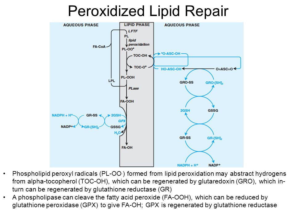 Peroxidized Lipid Repair