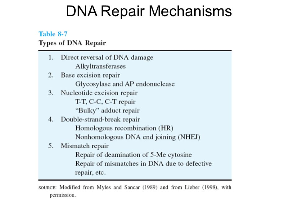 DNA Repair Mechanisms Apurinic/apyrimidinic (AP) endonuclease