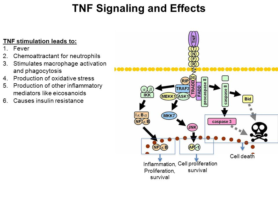 TNF Signaling and Effects