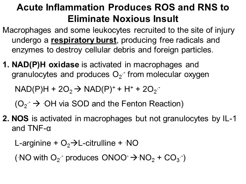 Acute Inflammation Produces ROS and RNS to Eliminate Noxious Insult