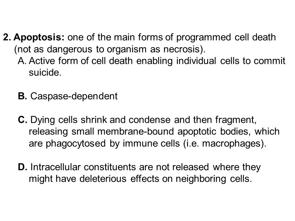 2. Apoptosis: one of the main forms of programmed cell death (not as dangerous to organism as necrosis).