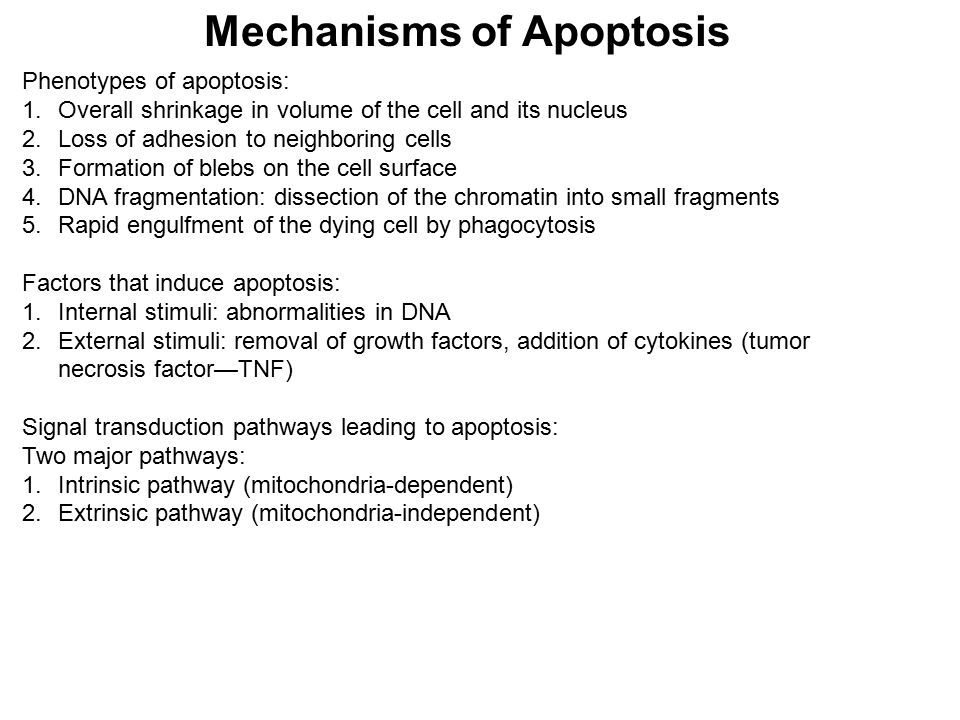 Mechanisms of Apoptosis