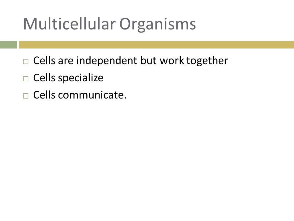 Multicellular Organisms