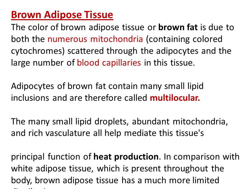 Brown Adipose Tissue