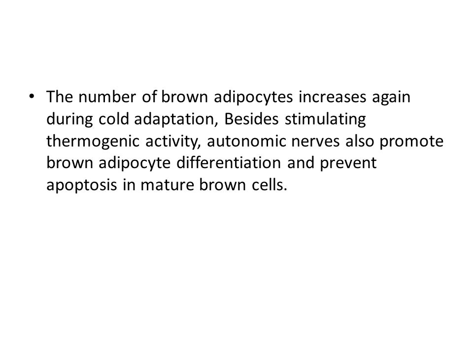 The number of brown adipocytes increases again during cold adaptation, Besides stimulating thermogenic activity, autonomic nerves also promote brown adipocyte differentiation and prevent apoptosis in mature brown cells.