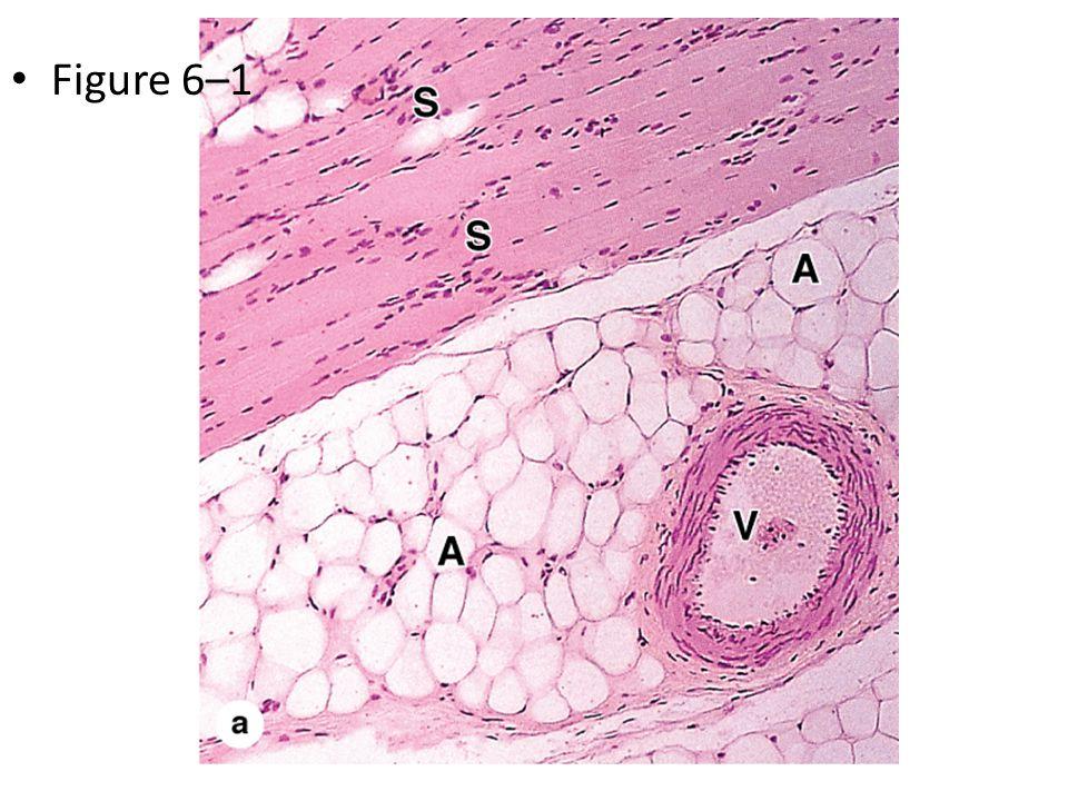 Figure 6–1