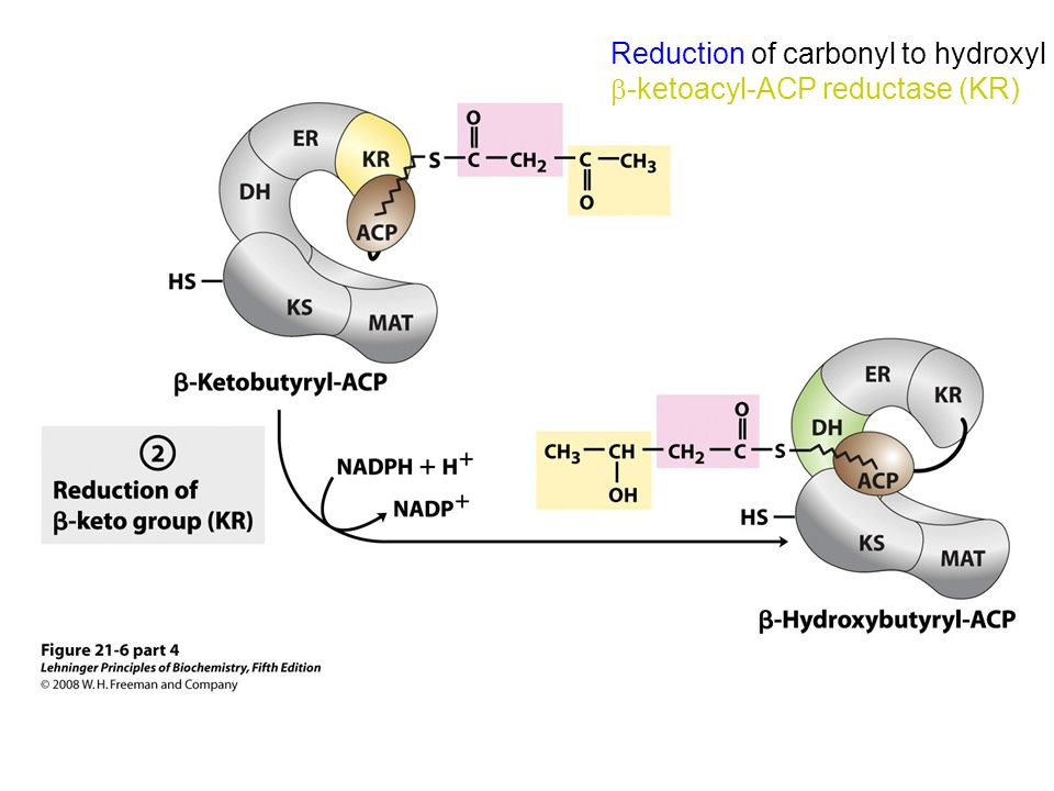Reduction of carbonyl to hydroxyl -ketoacyl-ACP reductase (KR)