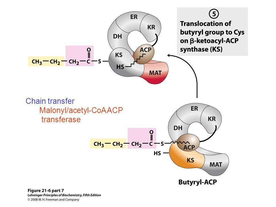 Malonyl/acetyl-CoA ACP transferase