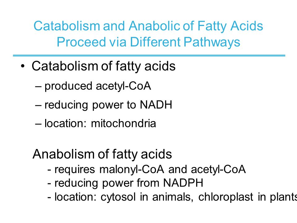 Catabolism and Anabolic of Fatty Acids Proceed via Different Pathways