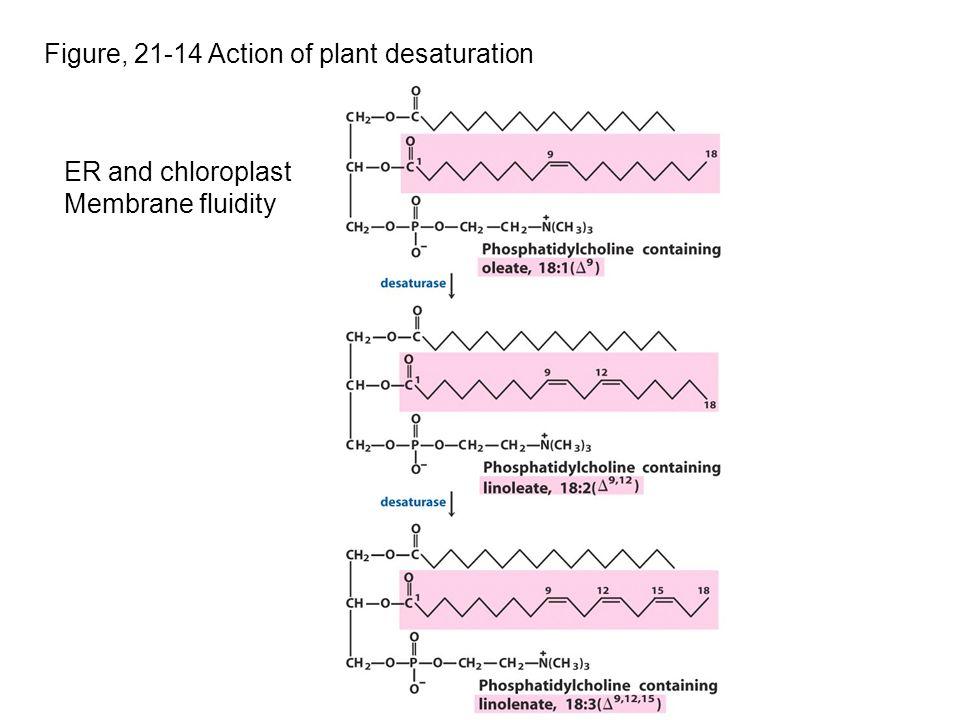 Figure, 21-14 Action of plant desaturation