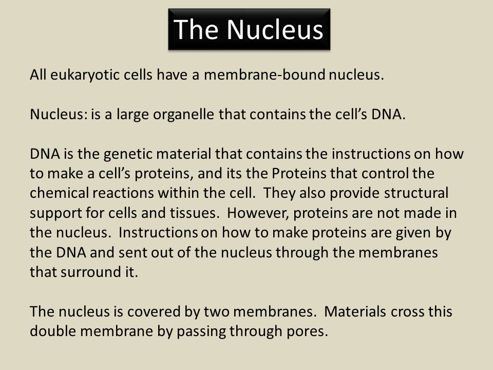 The Nucleus All eukaryotic cells have a membrane-bound nucleus.