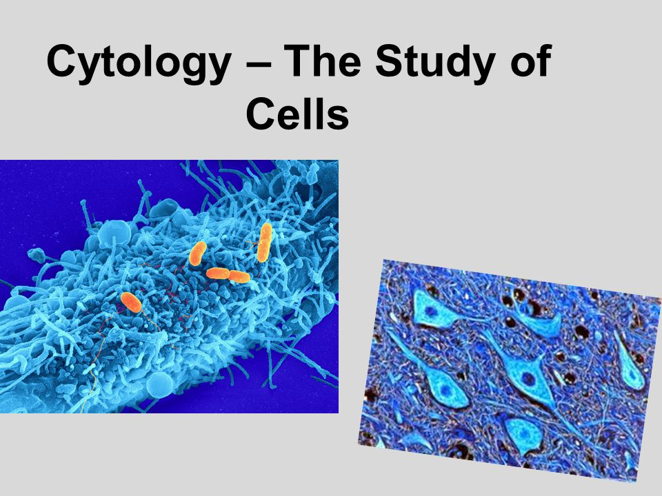 Cytology – The Study of Cells
