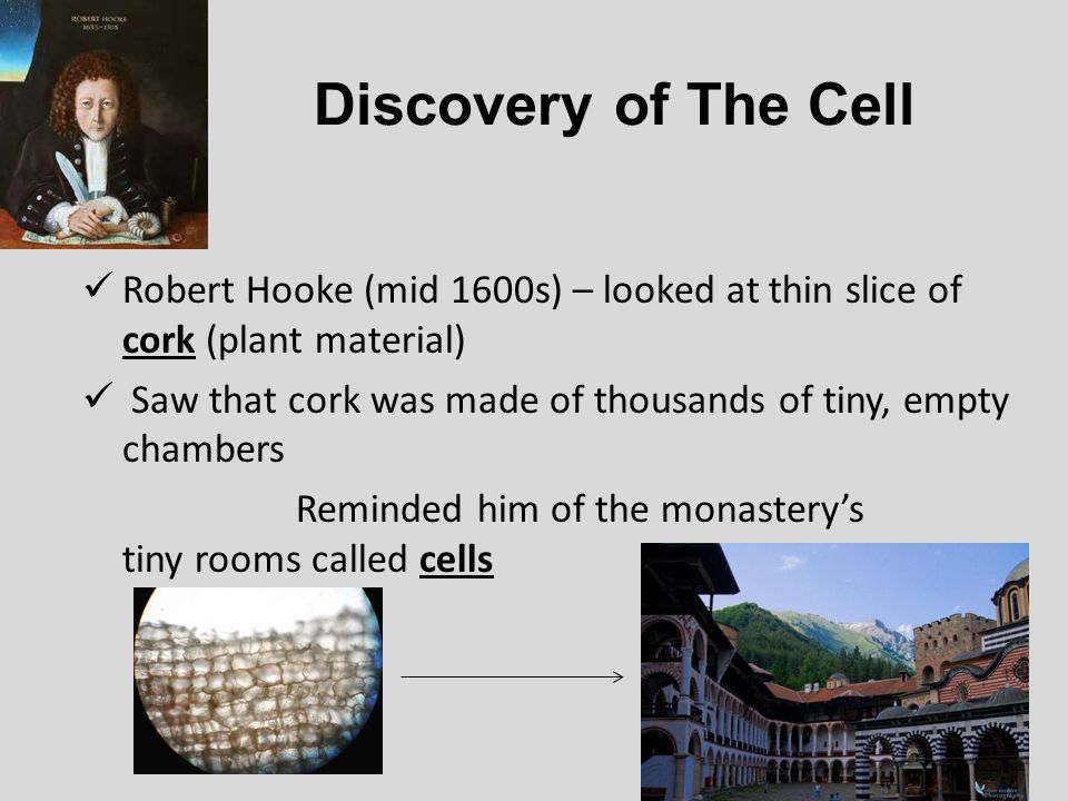 Discovery of The Cell Robert Hooke (mid 1600s) – looked at thin slice of cork (plant material)