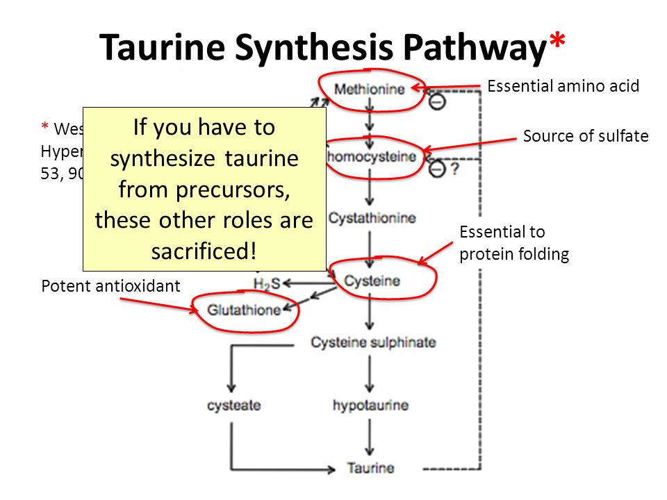 Taurine Synthesis Pathway*