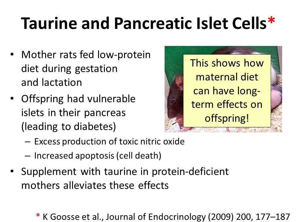 Taurine and Pancreatic Islet Cells*