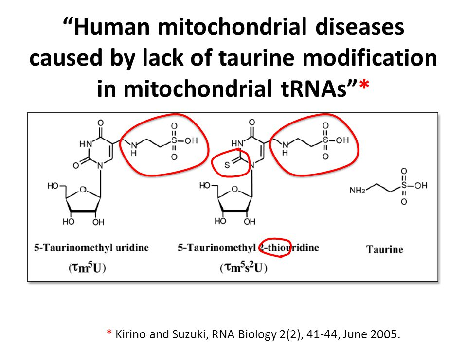 Human mitochondrial diseases caused by lack of taurine modification in mitochondrial tRNAs *