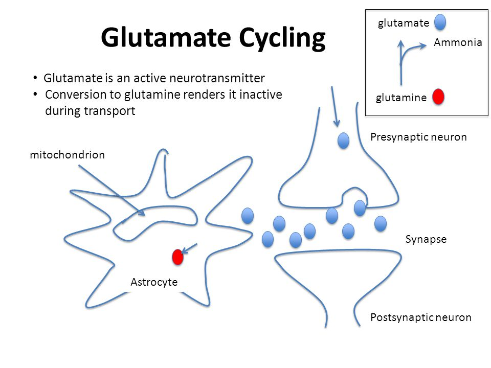 Glutamate Cycling Glutamate is an active neurotransmitter