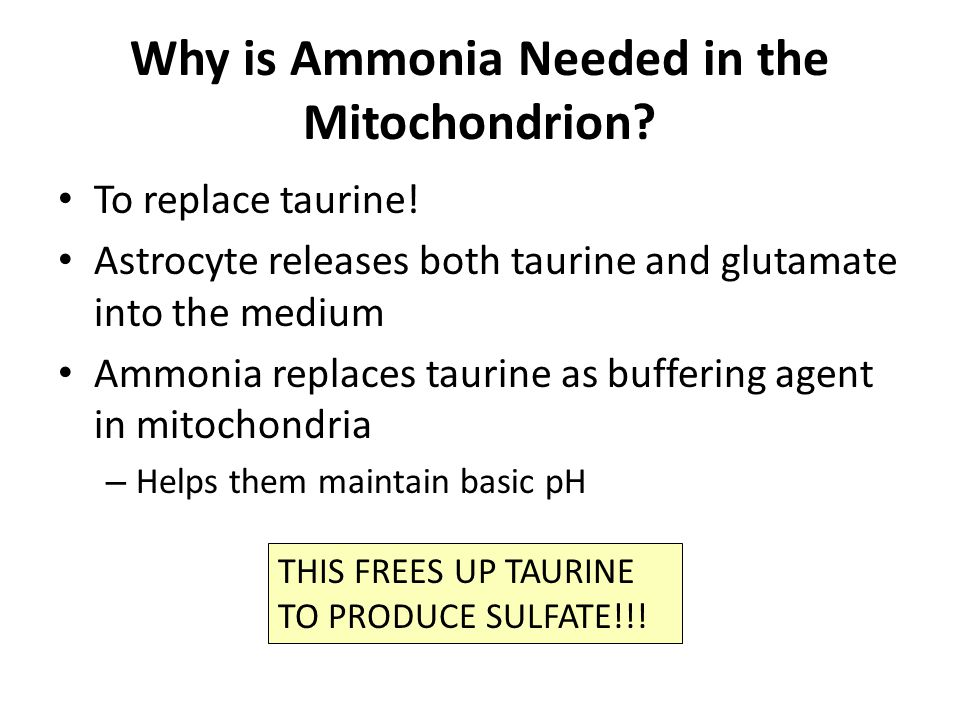 Why is Ammonia Needed in the Mitochondrion