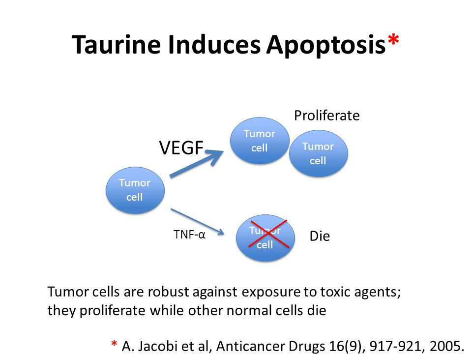 Taurine Induces Apoptosis*