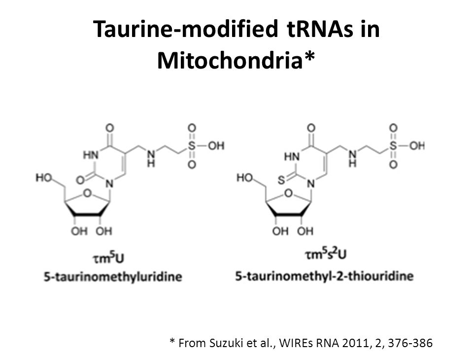Taurine-modified tRNAs in Mitochondria*