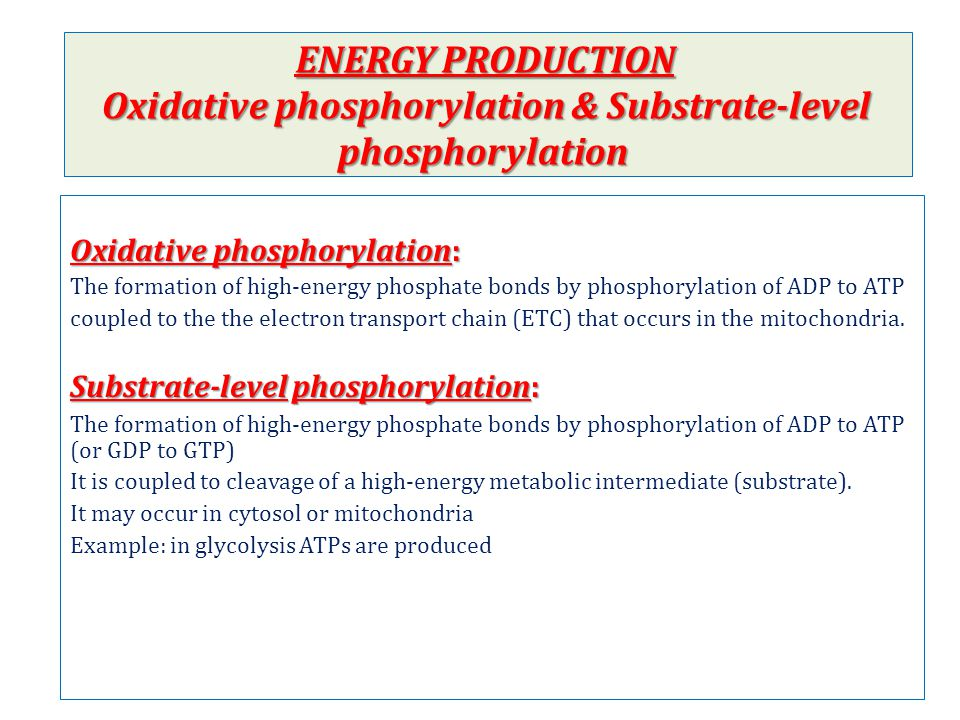 ENERGY PRODUCTION Oxidative phosphorylation & Substrate-level phosphorylation