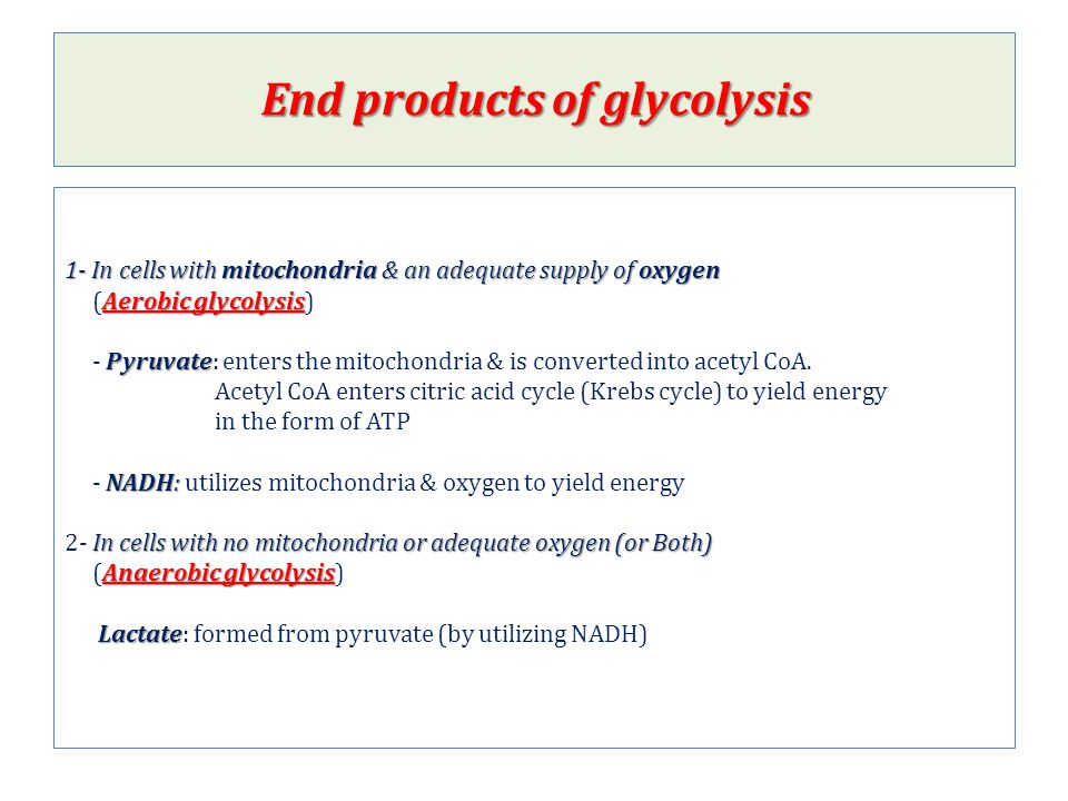 End products of glycolysis
