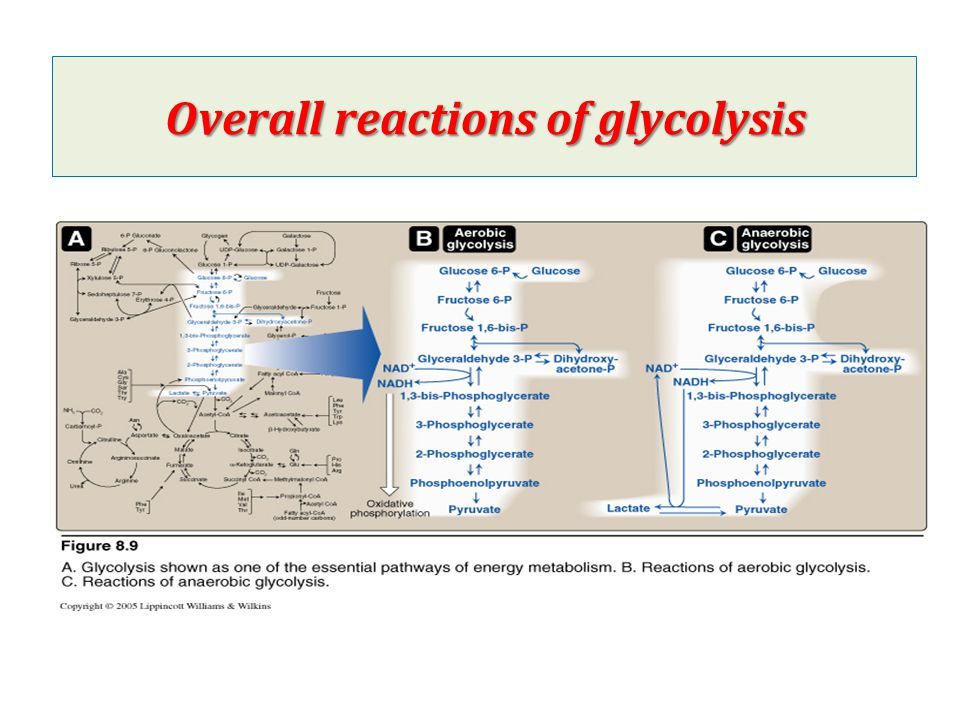 Overall reactions of glycolysis