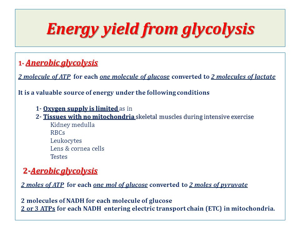 Energy yield from glycolysis