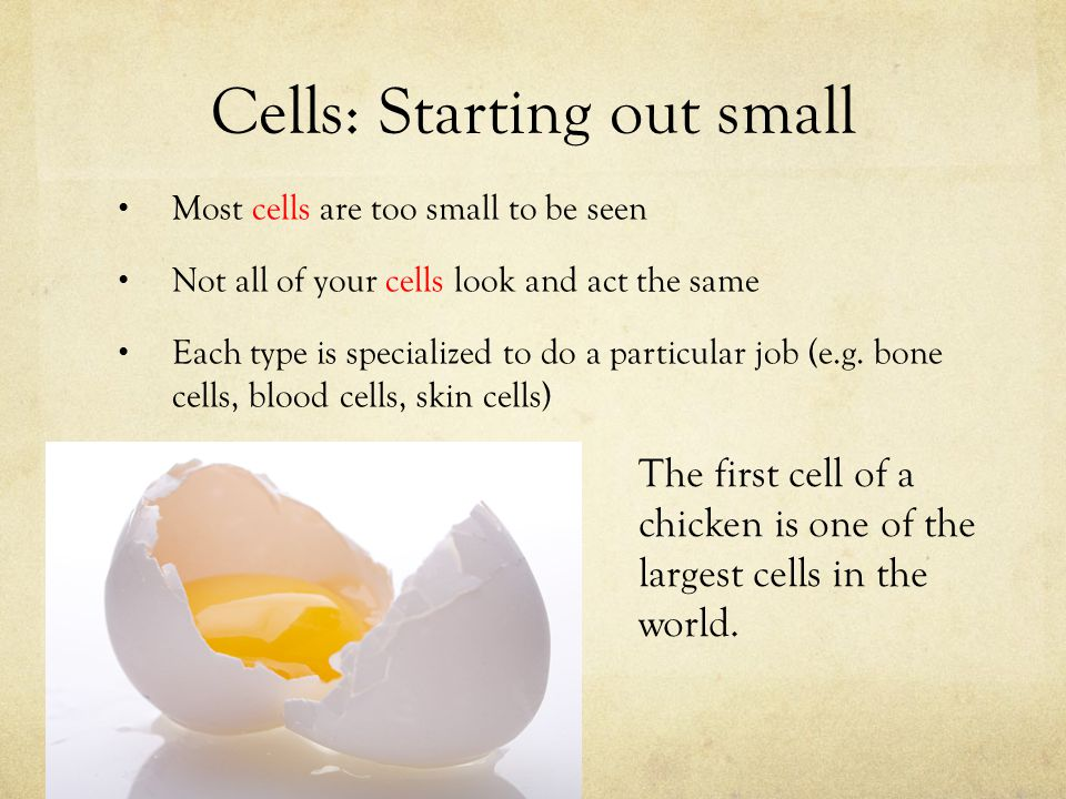 Cells: Starting out small