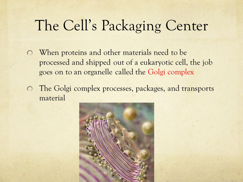 The Cell's Packaging Center