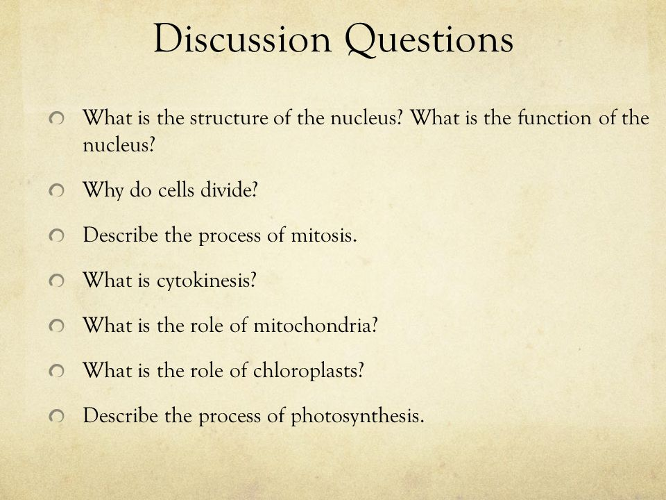 Discussion Questions What is the structure of the nucleus What is the function of the nucleus Why do cells divide